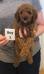 Lola Boy 1 2-26