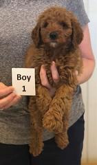 Lola Boy 1 pic 2 2-26