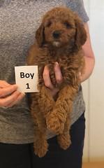 Lola Boy 1 pic 3 2-26