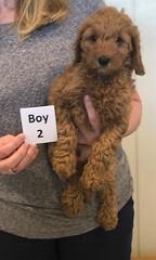 Lola Boy 2 2-26