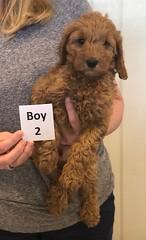 Lola Boy 2 pic 3 2-26