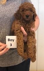 Lola Boy 3 pic 2 2-26