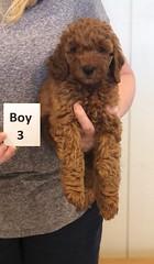 Lola Boy 3 2-26