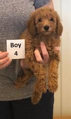 Lola Boy 4 pic 3 2-26