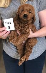 Ginger Boy 3 pic 3 2-26