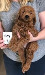 Ginger Boy 3 2-26