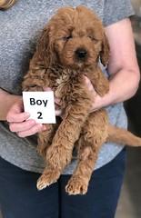 Ginger Boy 2 2-26