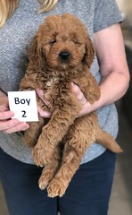 Ginger Boy 2 pic 4 2-26