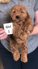 Ginger Girl 1 pic 4 2-26