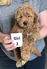 Ginger Girl 2 pic 3 2-26