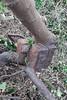 A brick tree!