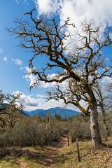 Enchanted Forest & Felton Memorial Trails