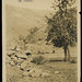 Oldest Apple Tree in Idaho, circa 1915 - Spalding, Idaho
