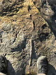 Photo of Fossilised branch. Rhoose village beach loop walk with Mrs SW, Feb 27th. What a beautiful day.