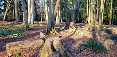 Photo of Brookwood Country Park