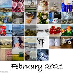 Photo of 365 ~ Mosaic February 2021