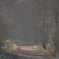 Photo of Passing mist-7518