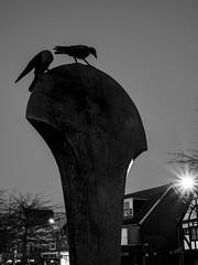 Photo of Crawley Crows