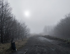 Photo of A Foggy Path