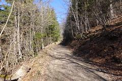 Route d'exploitation forestière @ Saint-Jean-de-Tholome