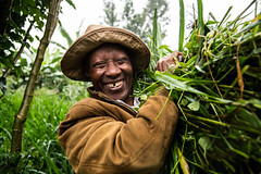 Simon Kiruja carrying cut grass for his dairy farm in Meru, Kenya.