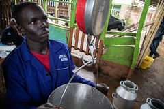 Weighing the milk before it taken to the cooperative at Simon and Sylvia Kiruja's dairy farm in Meru, Kenya.