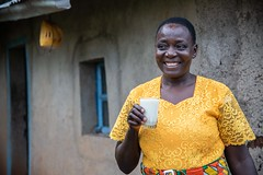 Nelly Adhiambo has increased her milk production in Busia, Kenya as a result of grasses introduced in the Grass to Cash project project together with KALRO, Send a Cow and Advantage Crops.