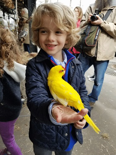 Everett And The Red-Crowned Parakeet (GIF)