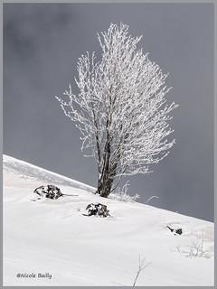 le solitaire blanc (lone white)