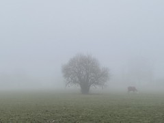 Photo of horse in fog, Hayes Street Farm