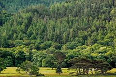 Parklandschaft bei Muckross House, Killarney National Park II, Irland