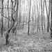 20210303-Clowes wood