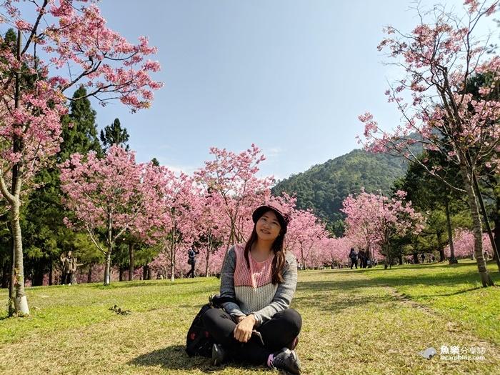 【南投旅遊】2021九族文化村櫻花祭|交通 路線規劃 攻略 最新花況 @魚樂分享誌