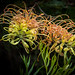 Mendocino Coast Botanical Gardens 9/30/20