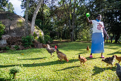 Elizabeth Omusiele with her chickens. She grows diverse seeds on her farm with support from the Alliance and partners.