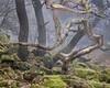 Padley - Narwhal tree