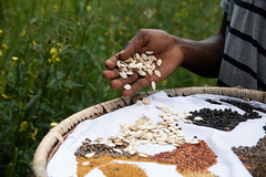 Diverse seeds at the farmer run seed bank at Vihiga set up together with partners.