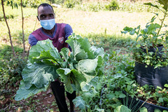 Ogaye Format shows the diverse vegetables and new cultivation methods he is using on his farm with support from the Alliance and partners.