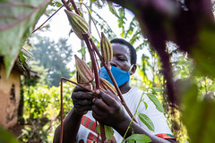 Elizabeth Omusiele shows the diverse seeds she is growing on her farm with support from the Alliance and partners.