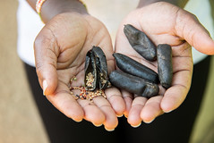 Diverse seeds at the farmer run seed bank at Vihiga, Kenya. Researchers at the Alliance worked with partners.
