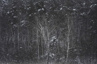 from the series drawing winter