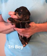 Irma Tri Boy 3026