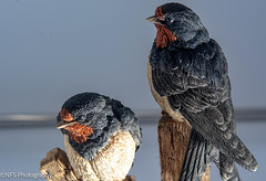 Photo of Country Artist Birds