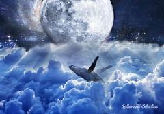 Lune et Baleine