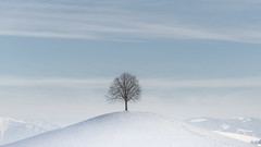 Centered Tree