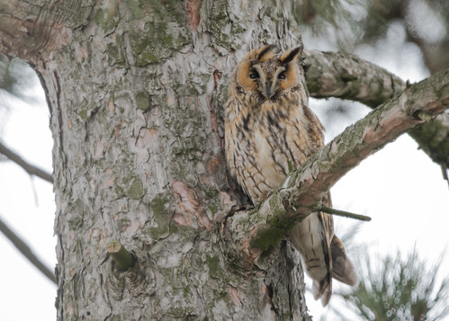 My first owl photo!