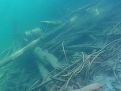 Woody debris, Chilliwack Lake