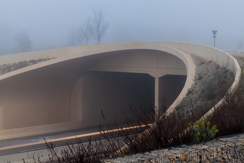 morning bridge