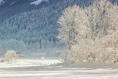 Tal bei Fieberbrunn Tirol III