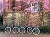 Bicycles - SC
